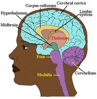 Neuro-3.jpg