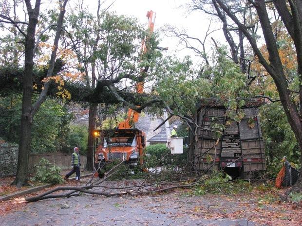 Thumbnail image for Trees2.jpg