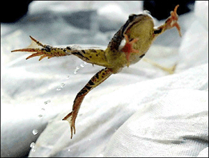 boiling-frog.jpg