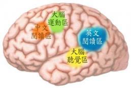 chinese_brain_characters.jpg