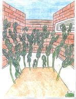 4-plants.jpg
