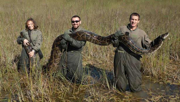 python-body.jpg