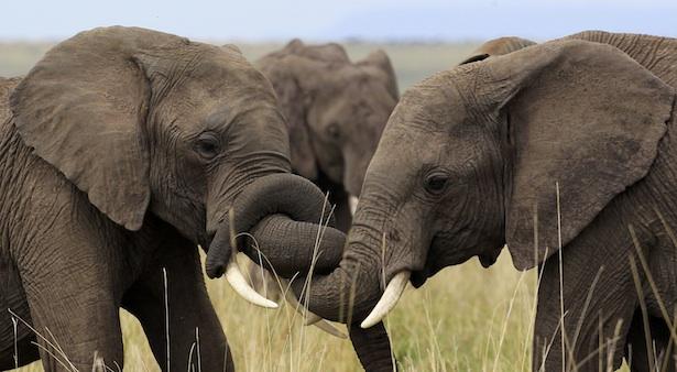 elephants full reuters.jpg