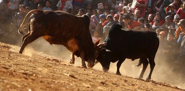 bull full.jpg