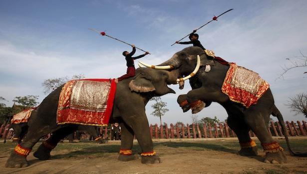 elephant fight full reuters.jpg