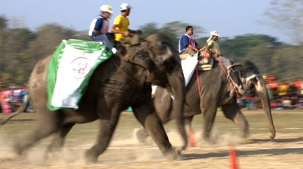 elephant race.jpg