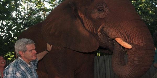 elephants never forget.jpg
