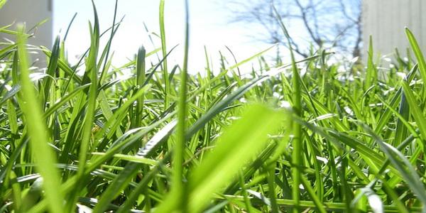 grass roots.jpg