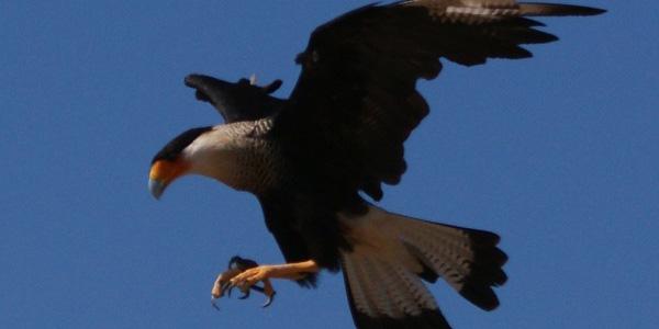 hawks full - banner.jpg