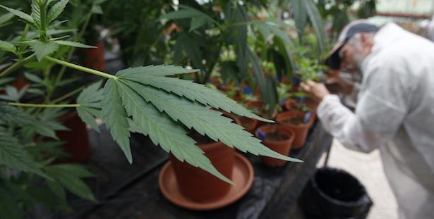 marijuana full.jpg