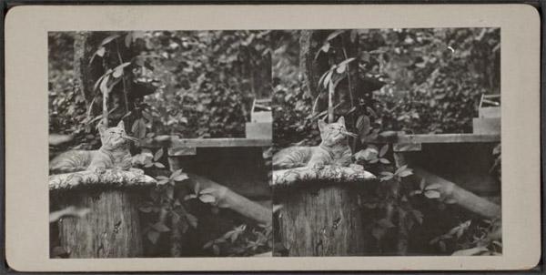 Cat stereoscope.jpg