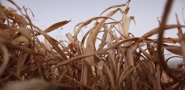 drought-615.jpg