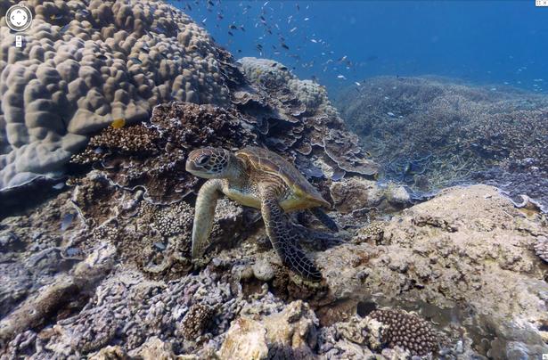Heron Island, Great Barrier Reef [1] copy.png
