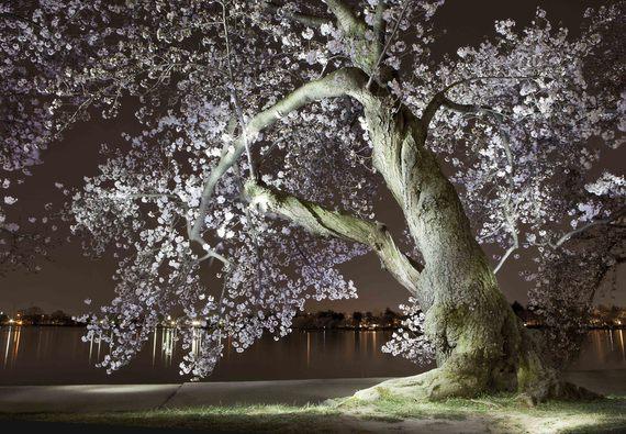 Painted blossom sm.jpg