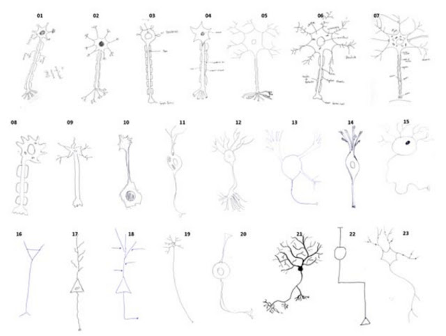 neuron drawings.jpg