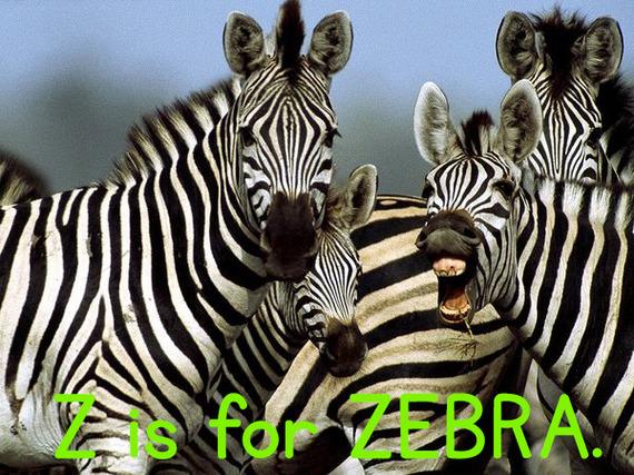 z_zebra.jpg