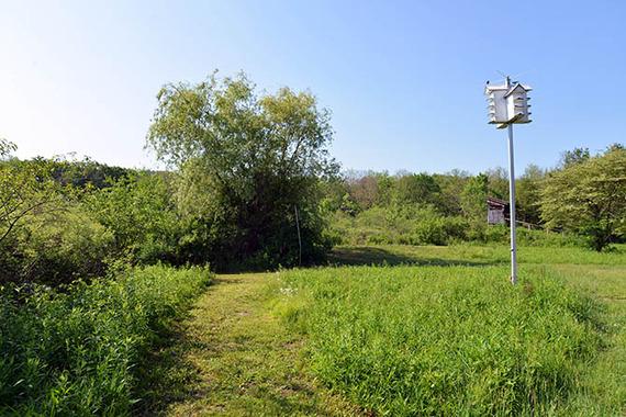 121 28 Bird house.jpg