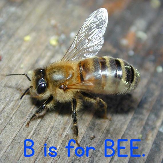 b_bee.jpg