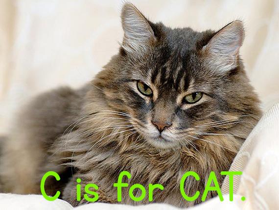 c_cat2.jpg