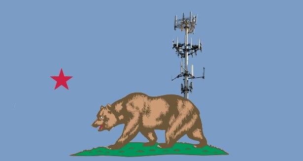 california_cell_bear.jpg