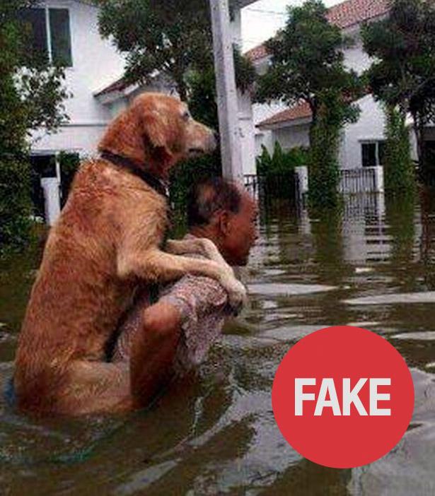 dog_fake.jpg