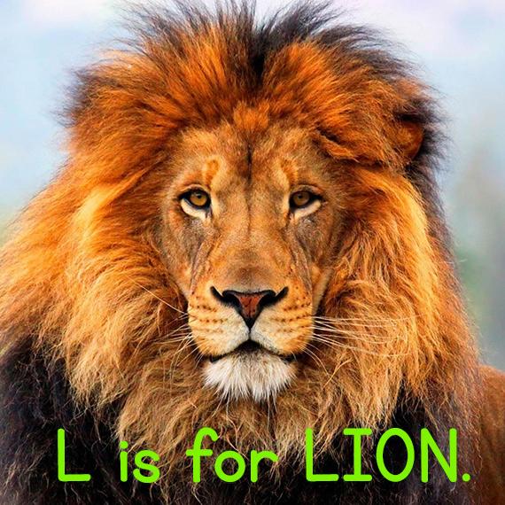 l_lion.jpg