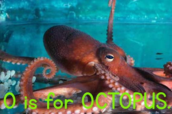 o_octopus.jpg