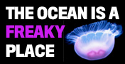oceanbug.jpg