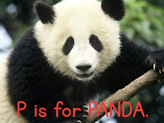 p_panda.jpg