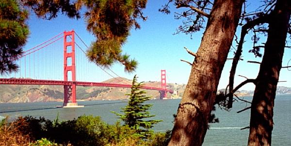 sf-trees-large.jpg