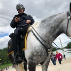 photo: a mounted police officer looks at his phone