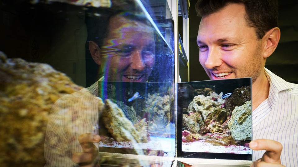 Alex Jordan holds a mirror up to a cleaner-wrasse tank.