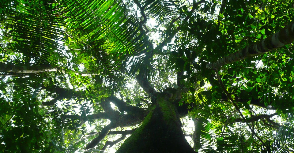 The Amazon Rainforest Was Profoundly Changed By Ancient Humans The Atlantic