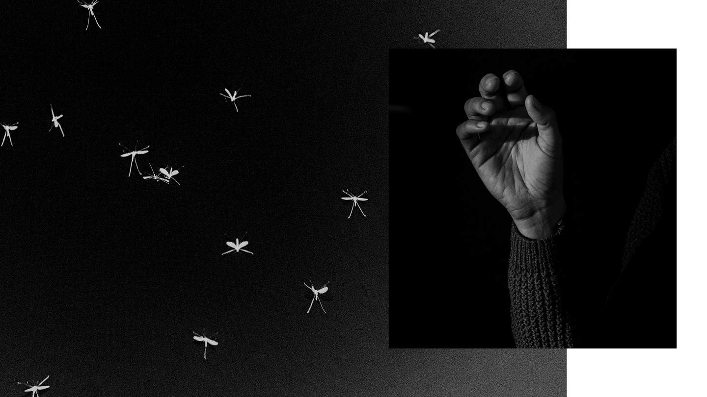 Photographs of mosquitos and a hand