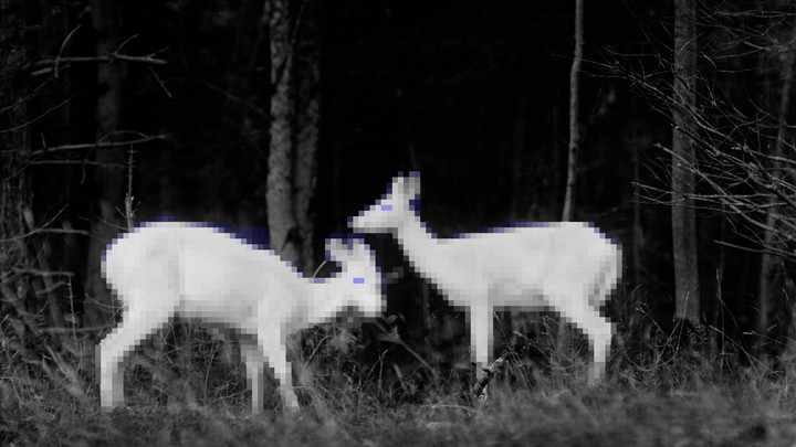 A slightly pixelated black and white photo of two deer in the woods