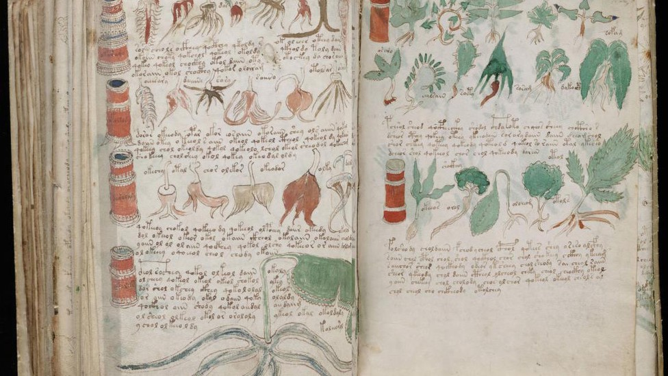 Pages from the Voynich manuscript showing plants
