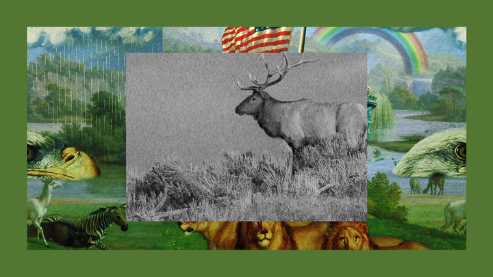 "An elk standing alone at sunset in Yellowstone National Park, set in a frame of show art from ""The Experiment"""