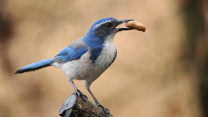 A bird holding a peanut