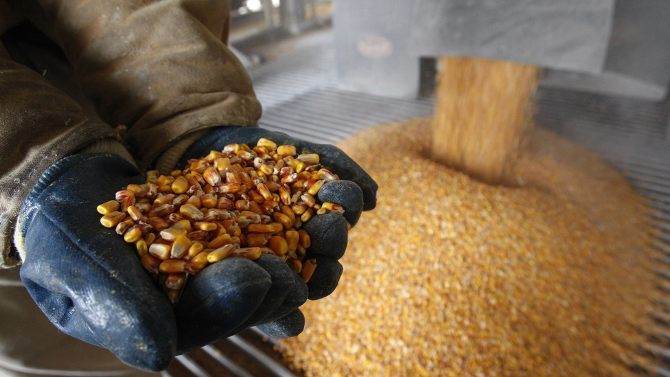 Hands hold a pile of dried corn as more corn pours out of a funnel behind them.