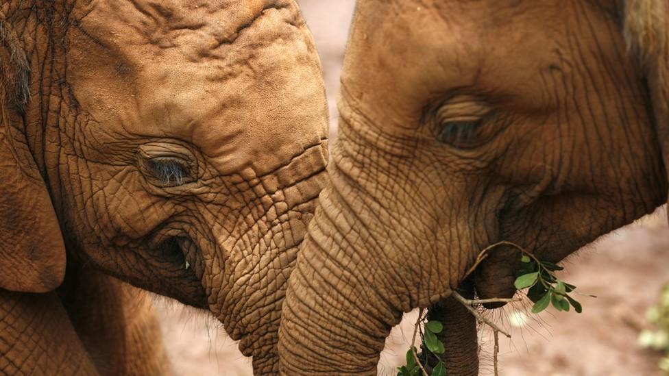 Two baby elephants.