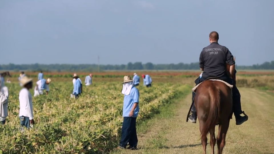 """A person wearing a shirt that says """"correctional officer"""" on the back rides a horse through a field where people in blue uniforms are working."""
