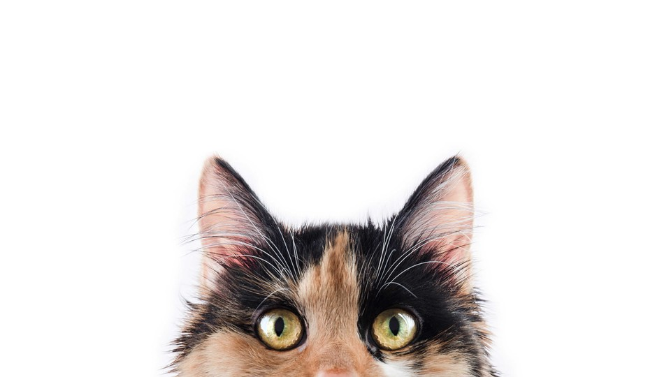 a calico cat peeking out of the bottom of a photo