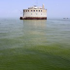 A photo of Lake Erie water looking green from algae.
