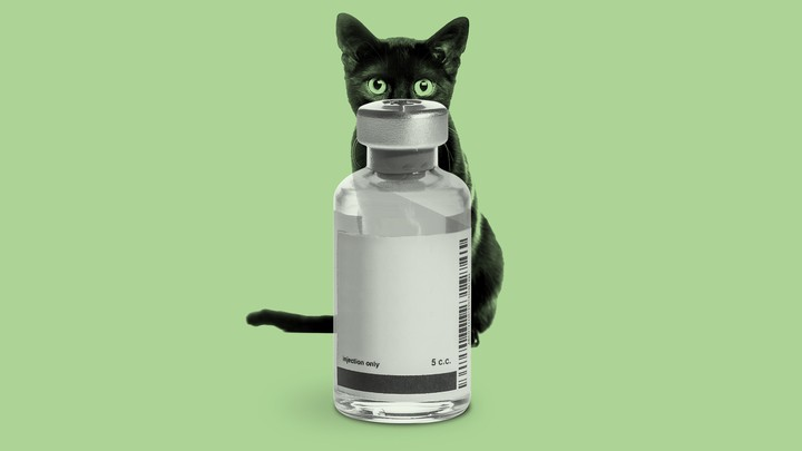 Cat hiding behind an unmarked vial