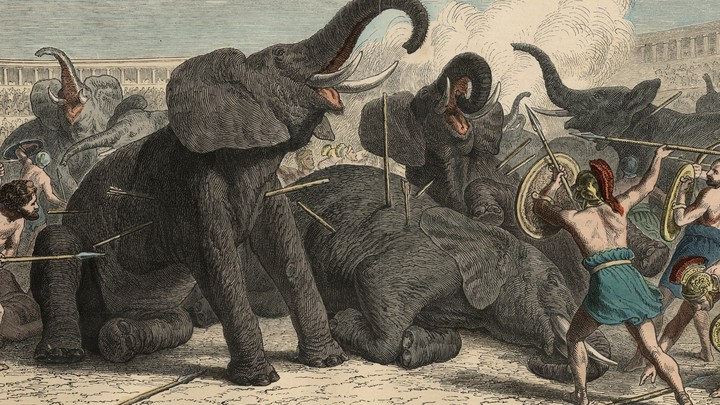 The Exotic Animal Traffickers of Ancient Rome - The Atlantic