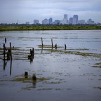 A marsh wetland with city's skyline in the background