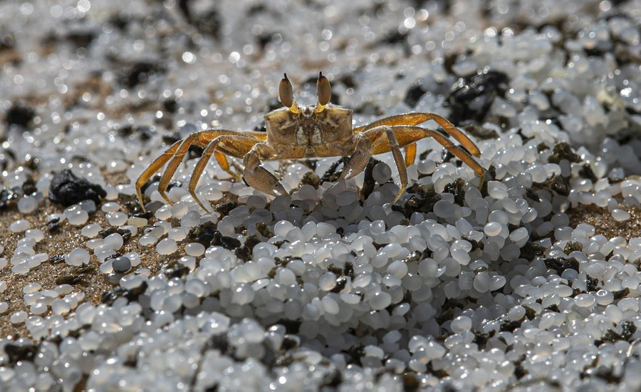 A small crab walks across piles of plastic pellets on a beach.