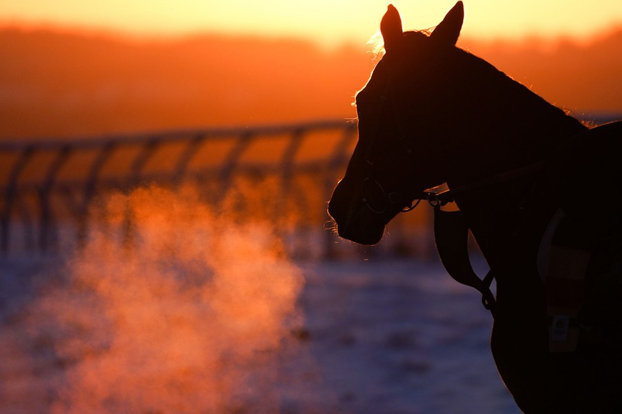A horse's breath is visible in the sunlight on a cold day.