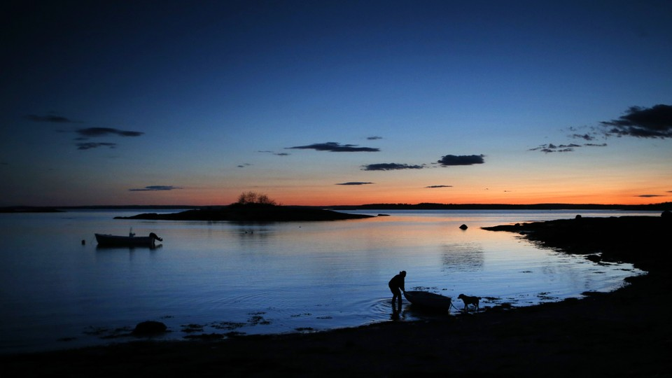 In the evening twilight, Diane Cowan, a marine biologist who has been studying lobster behavior and ecology for 30 years, ties up her skiff on the shoreline of Friendship Long Island, Maine.