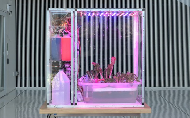 Leafy greens grow in one of the MIT Media Lab's contraptions